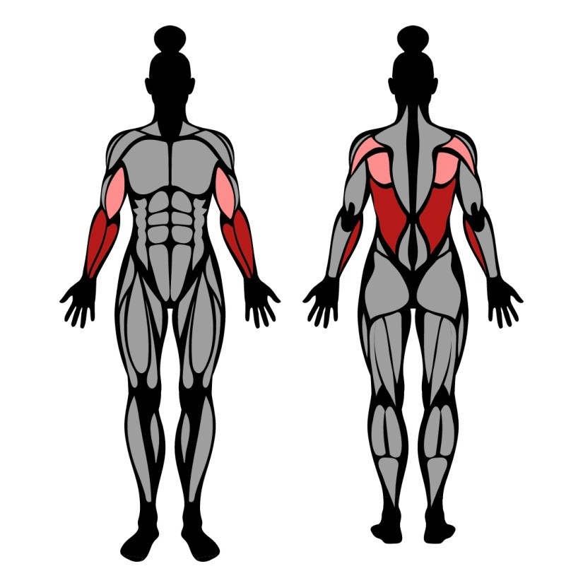 Muscles worked in towel pull-up