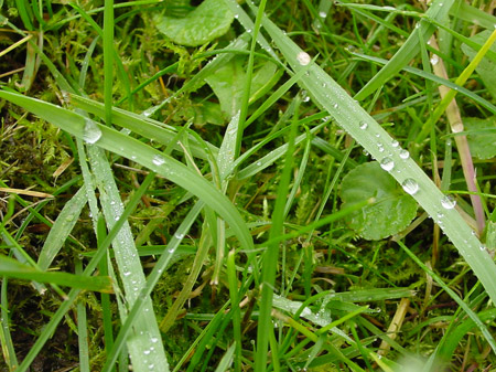 Farbe bekennen: Grasgrün