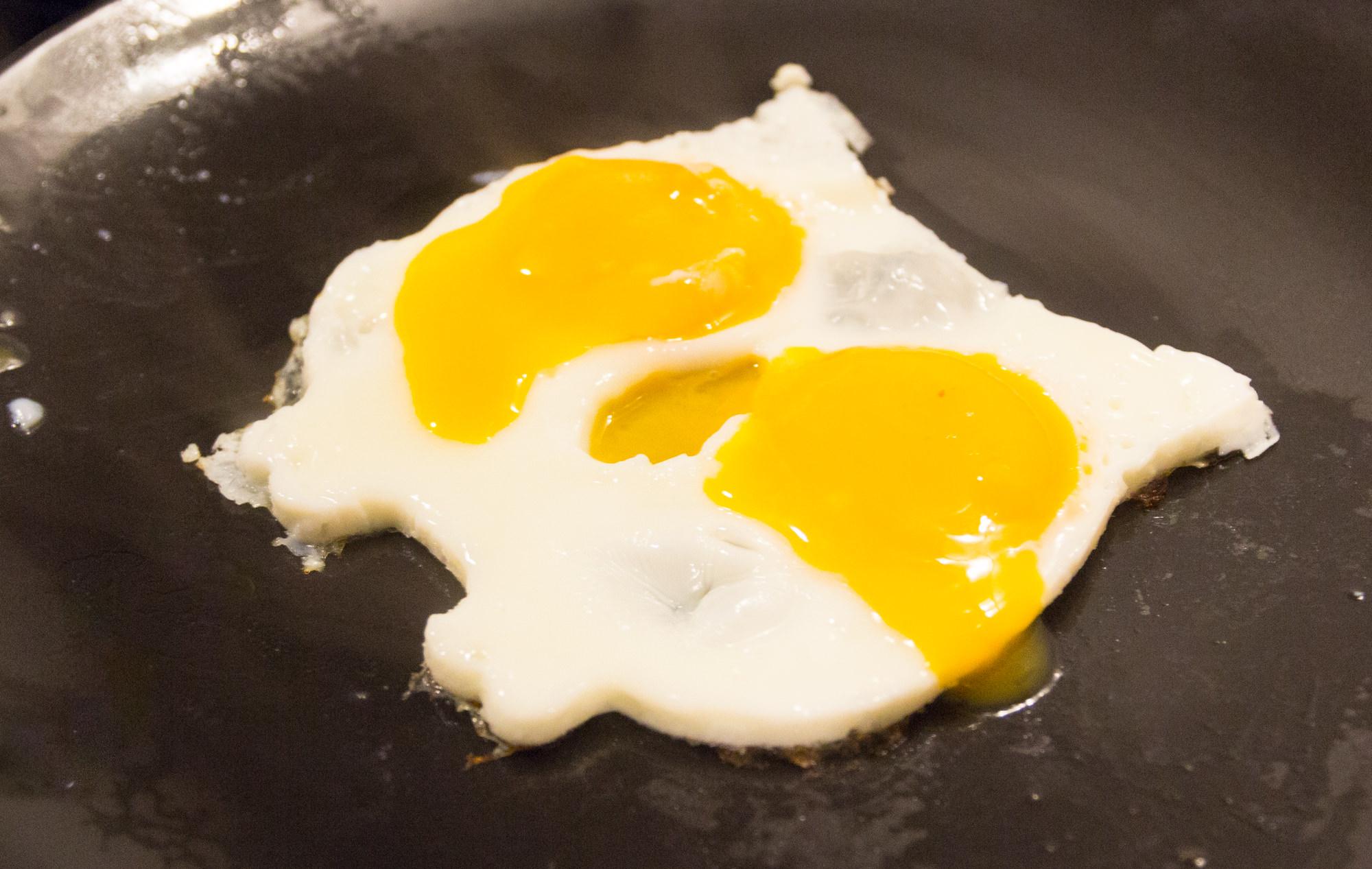egg animals