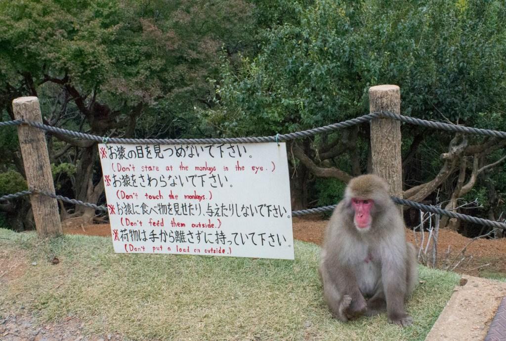 Iwatayama monkey park