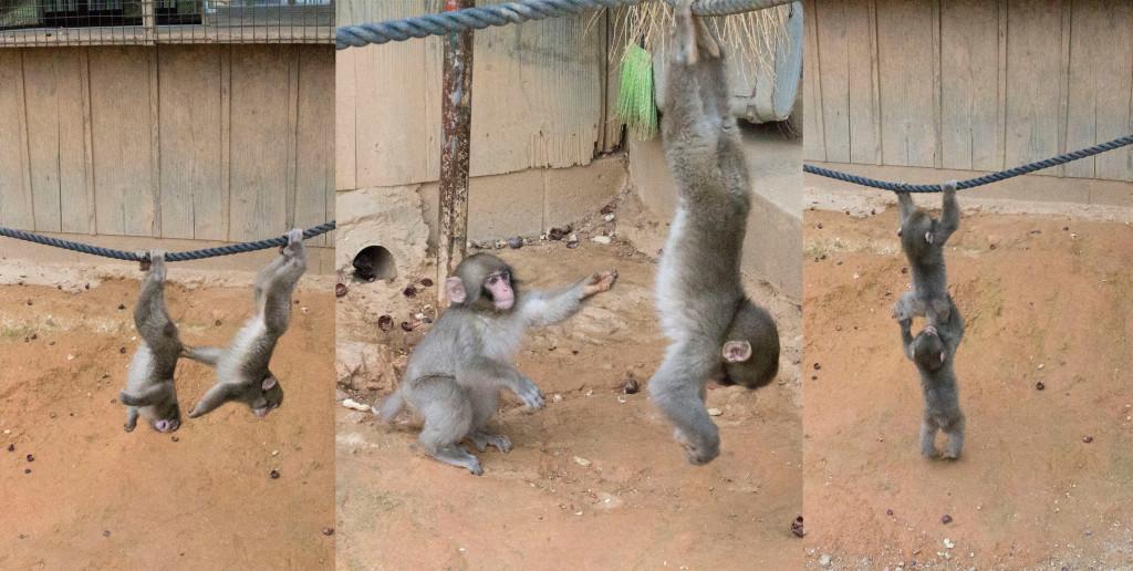 monkeys arashiyama