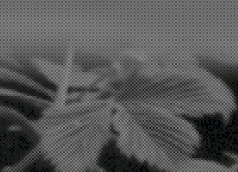 pixelation600pca