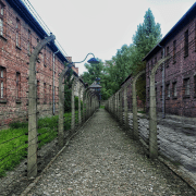 auschwitz photo - pexels.com