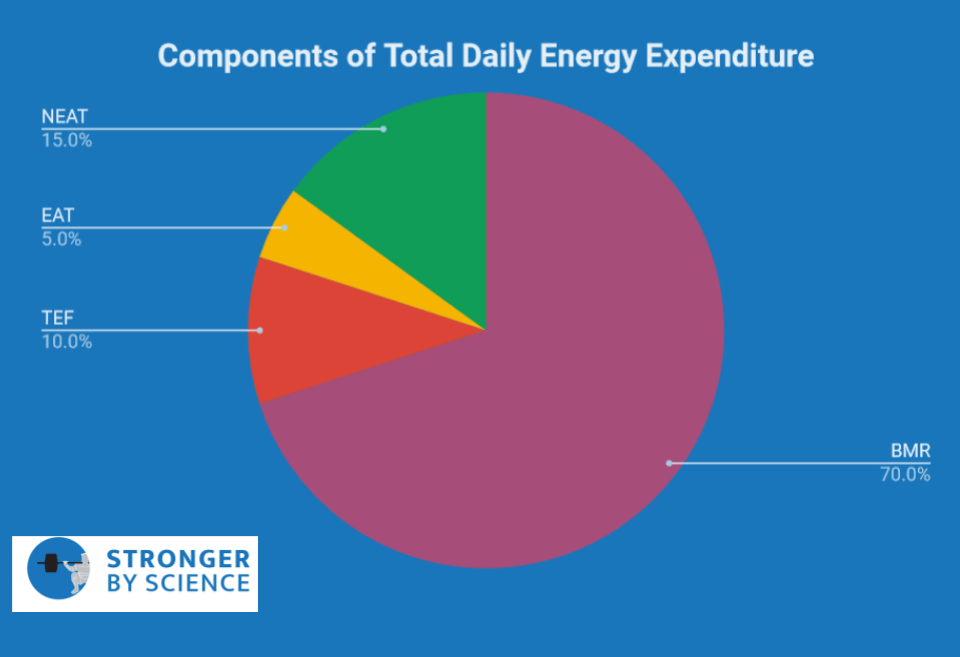 components of total daily energy expenditure – metabolic adaptation
