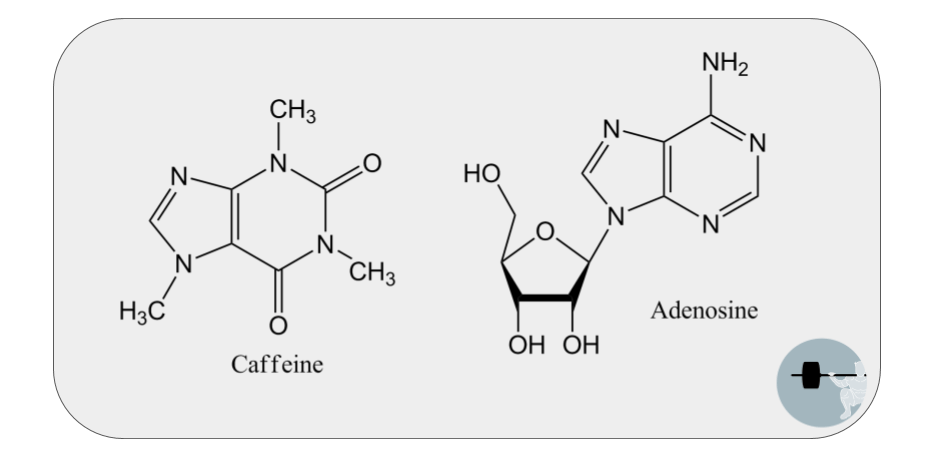 chemical structure of caffeine is quite similar to adenosine