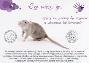 Ciekawostki, hodowla szczurów szczury nie powinny być trzymane w akwarium ani w terrarium
