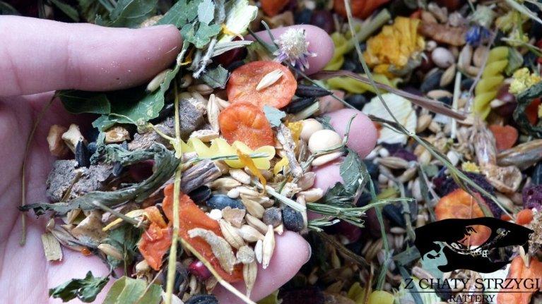karma dla szczurów, żywienie szczurów, dobra karma podstawowa, czym karmić szczury, warunki w hodowli