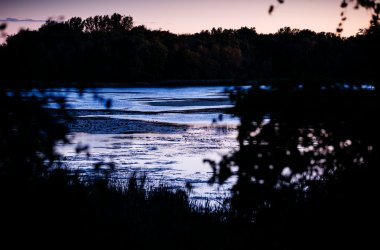 Lake Ellen, one of five lakes surrounding the vineyard, at sunset. According to Peterson, the large number of lakes in the area help regulate the temperature and make WineHaven an ideal place for grapes to survive an already short growing season in Minnesota.