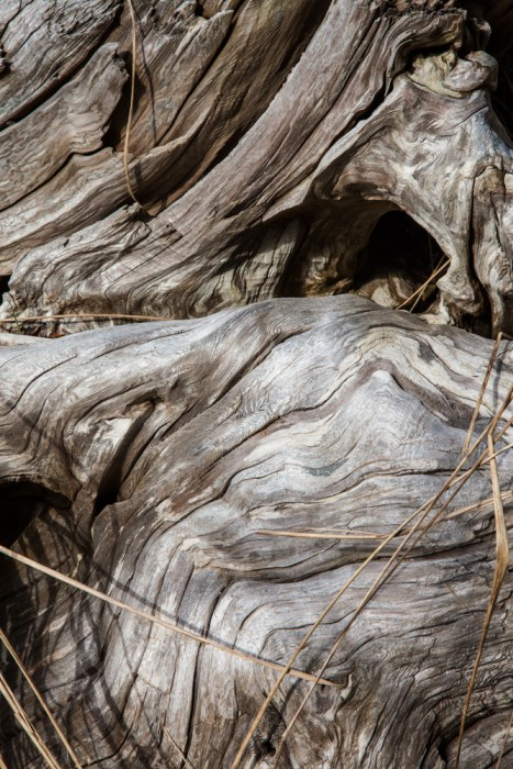Lake Ozette - Cape Alava Adventure - Driftwood Forms