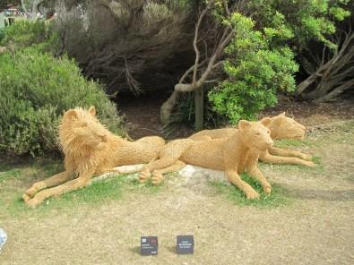 Predators in the Park