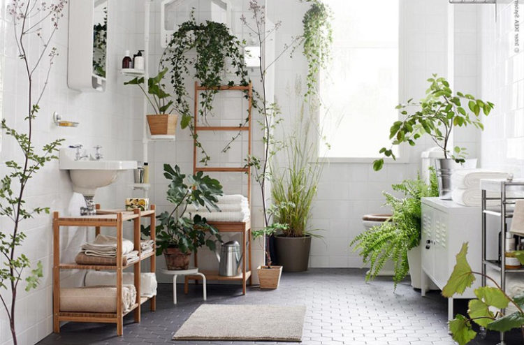 10 indoor plants you can t kill   Stuck On You Kookaburra horticulture
