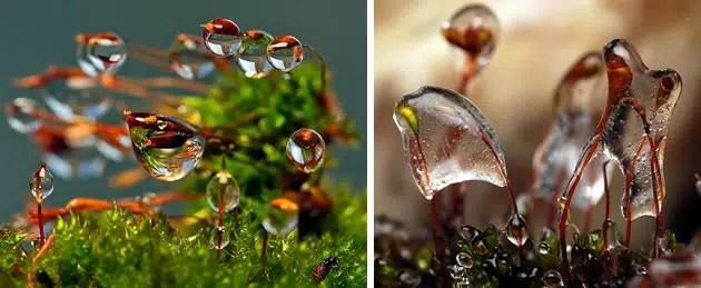 macro photography water drops