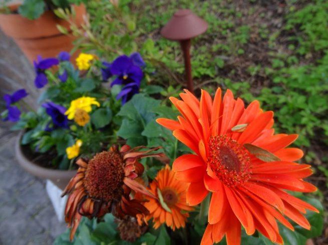 Primo-giorno-maggio-giardino-fiori-garden-flowers