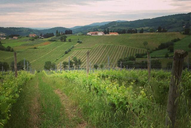 Italian-Language-Homestay-Umbria-Todi-Alessandra-Mallozzi