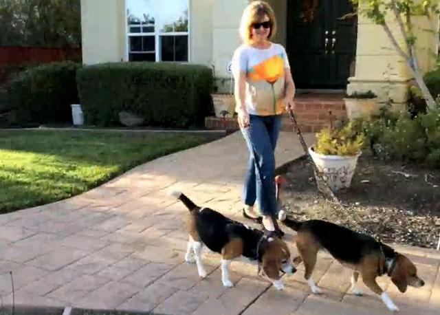 andiamo-a-spasso-italian-expression-walking-dogs-neighborhood-youtube-video