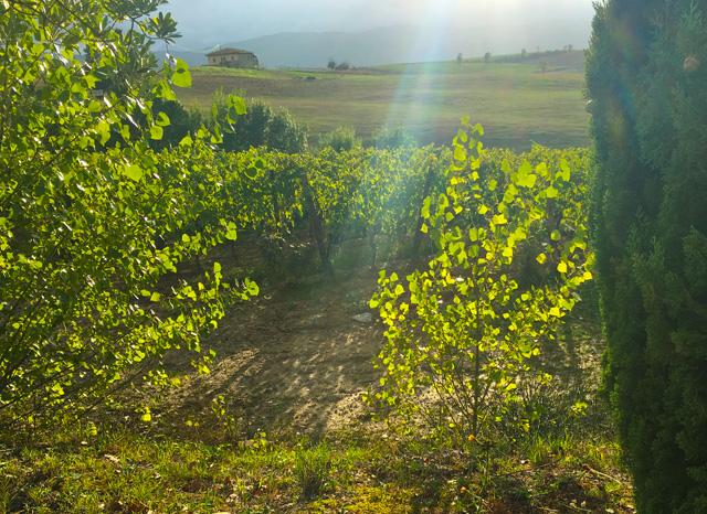 paradiso-di-frassina-montalcino-val-d-orcia-musical-italian-vineyard