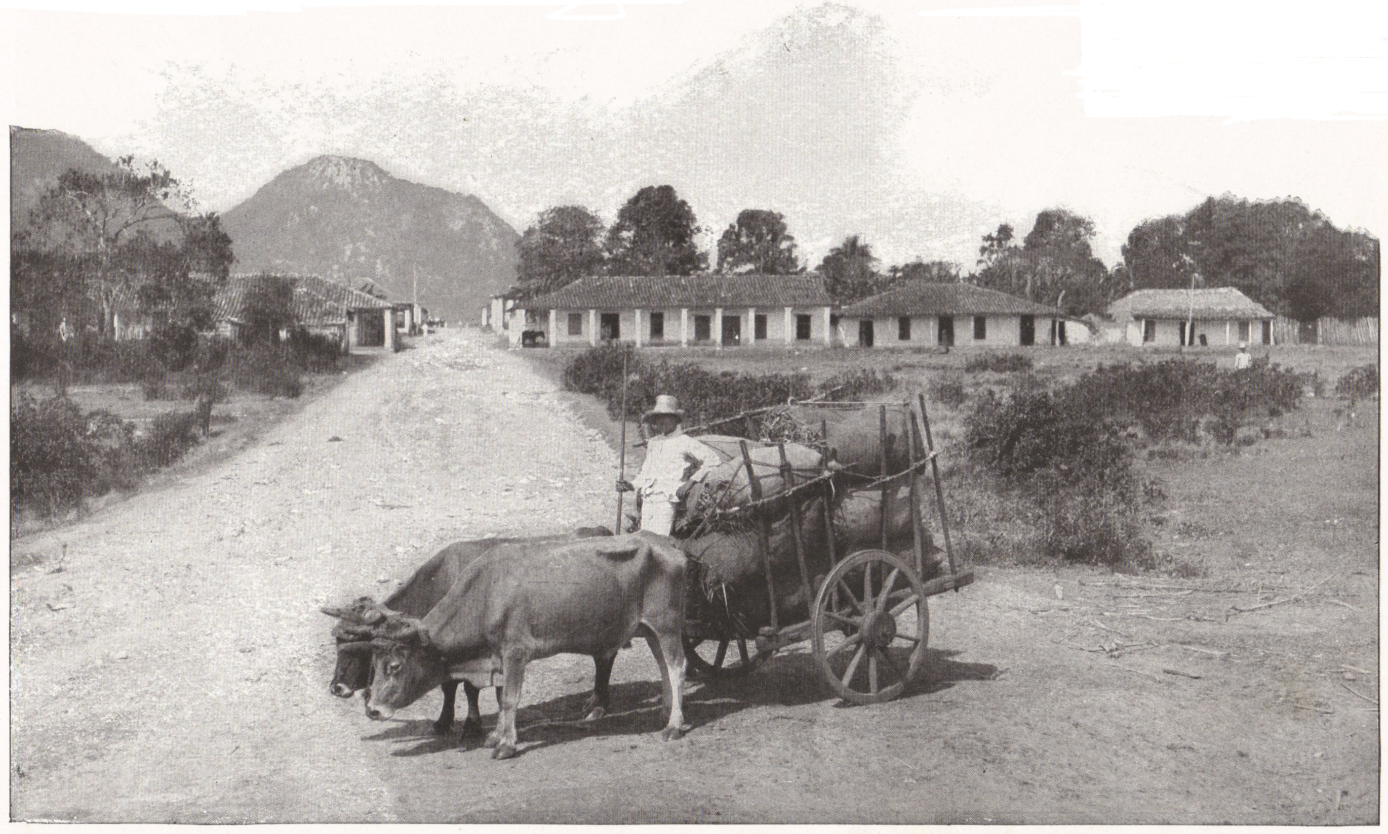 Cart Pulled By A Pair Of Oxen Cuba