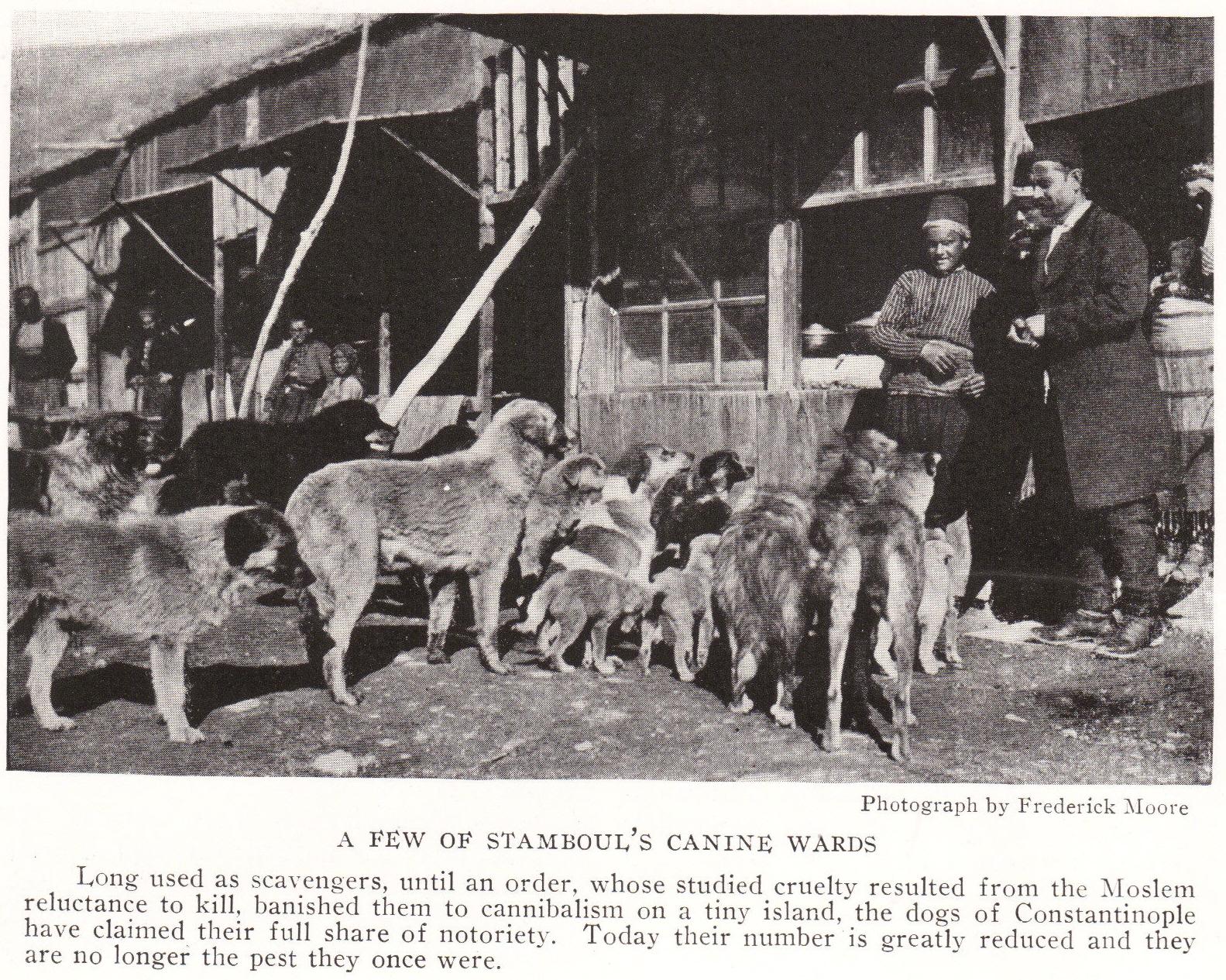 Canine Ward