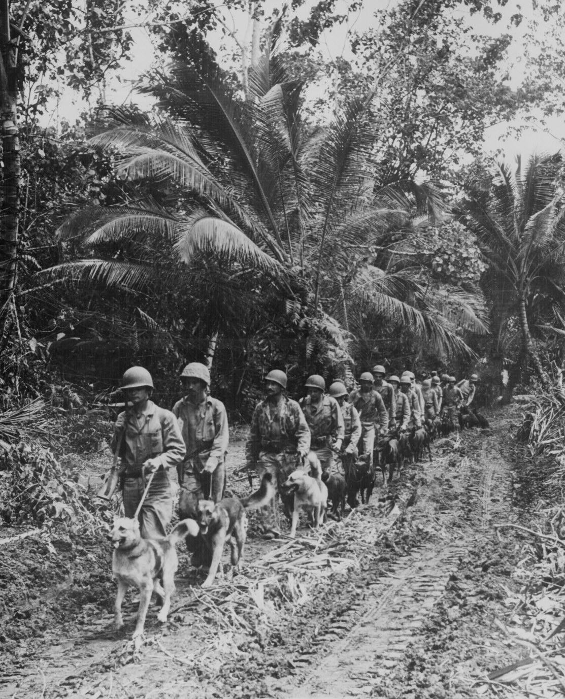 Marines With Dogs World War Ii