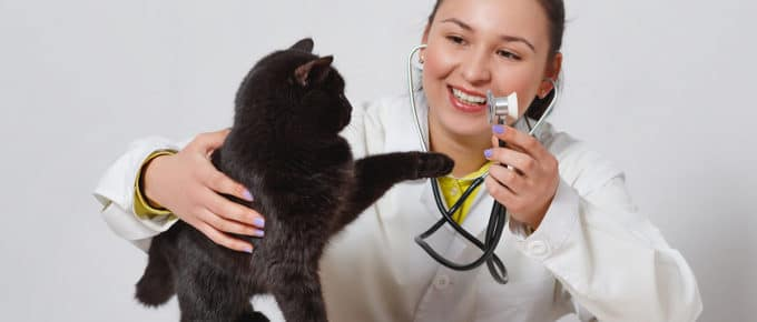 female-veterinarian-examining-black-cat