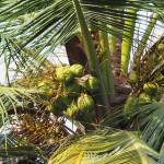 Palm tree in Solitude Farm