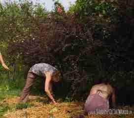 Building an Instant Garden