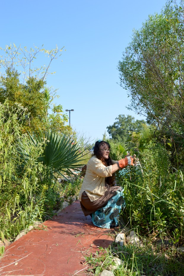 Tammy Greer, coordinator of the medicine garden, grooms the plants  for its 10th anniversary. All of the plants in the Medicine Wheel garden have medicinal purposes.  Jillian Rodriguez / Student Printz