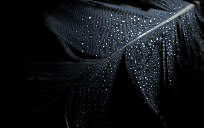black wallpaper 15