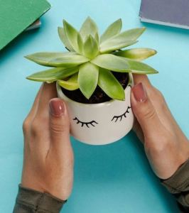 Sass & Belle Mini Eyes Shut Planter - ASOS