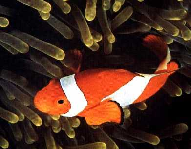 Los Peces Los peces so.. Animales -
