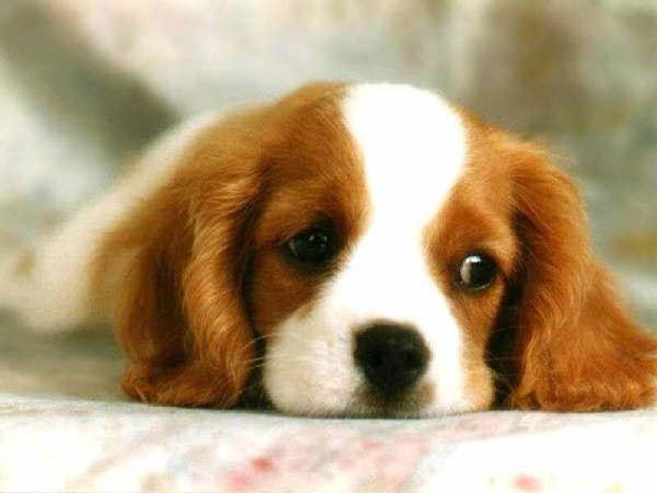 Los Perros Su definici.. Animales -
