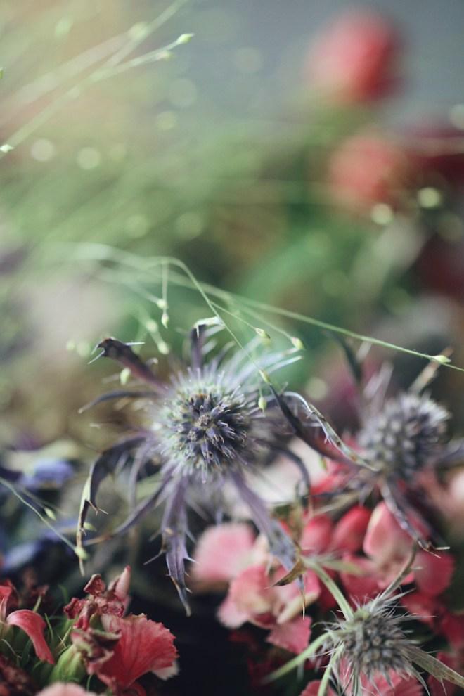 Natur Garten Blumen Fotografie Niederösterreich Wien