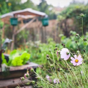 Garten Natur Fotografie Wienerwald Herbstanemone