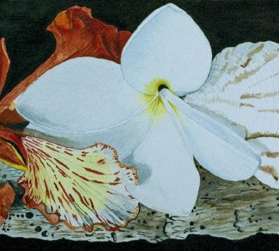painting - Caribbean Treasures