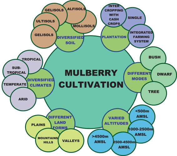 Fig. 2. Mulberry cultivation under diversified climates, soil conditions, land forms and at different altitudes.