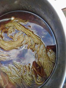 natural dye reed plumes