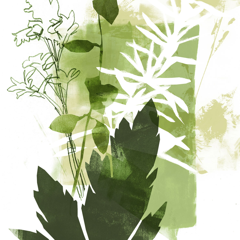 Herb illustration