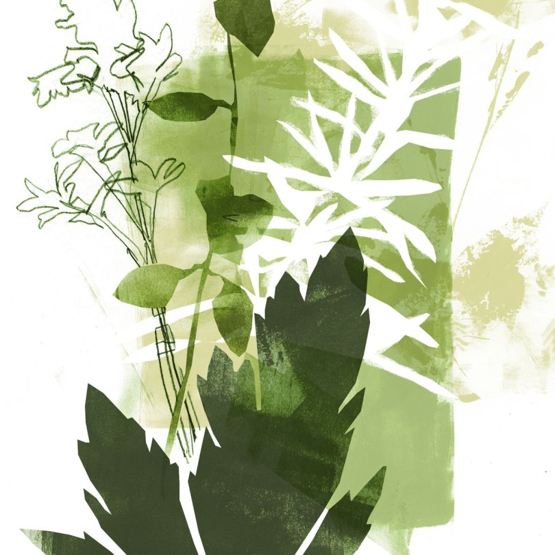 Herb illustration