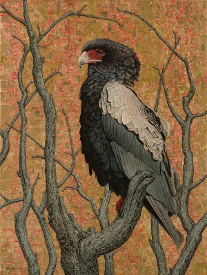 Bateleur Eagle II by Marc Alexander. Oil and gold leaf on canvas, 120cm by 90cm, 2015