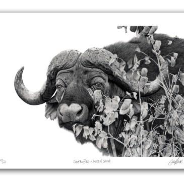 The Studio Art Gallery - Paper Print - Cape Buffalo in Mopani Shrub