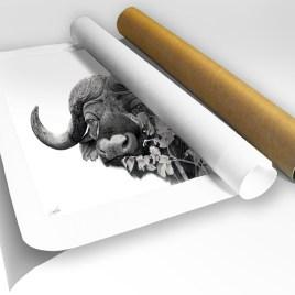 The Studio Art Gallery - Print in Tube - Cape Buffalo