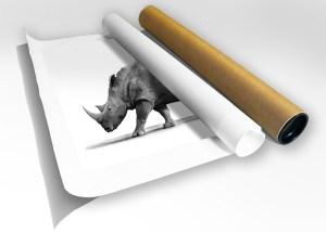 The Studio Art Gallery - Print in Tube - White Rhino with Ox Peckers