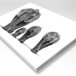 The Studio Art Gallery - African Elephants on Stretched Canvas
