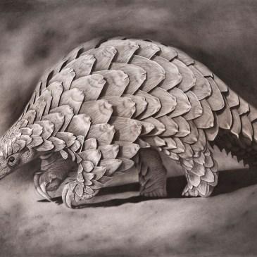 The Studio Art Gallery - Eco-Logic Awards 2019 - Artist for Nature Exhibition - Craig Ivor - Pangolin under the Poachers Moonlight