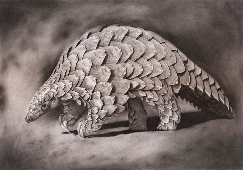 The Studio Art Gallery - Eco-Logic Awards 2019 - Artist for Nature Exhibition - Craig Ivor - Pangolin under the Poachers Moonlight