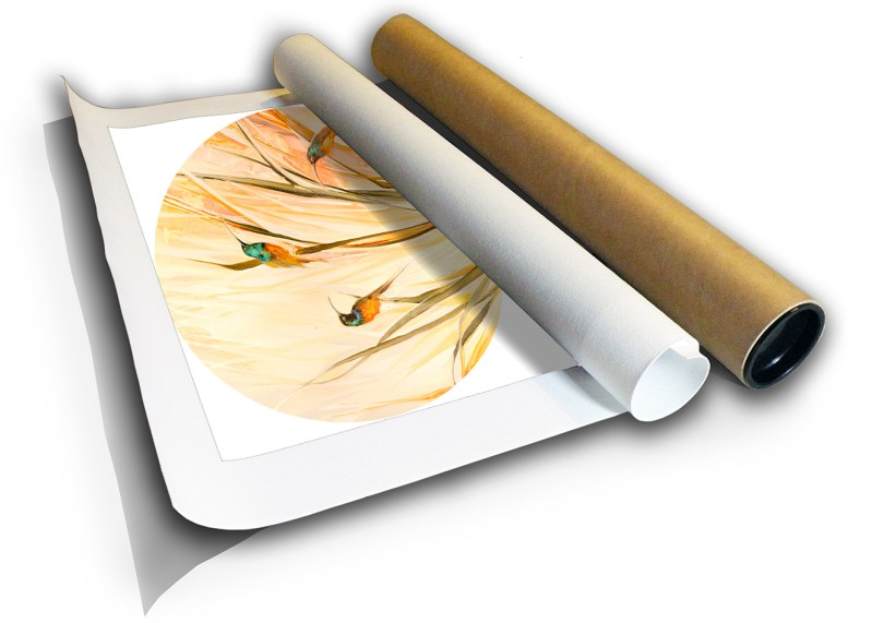 The Studio Art Gallery - Sunbirds by Yolo Quinn - Canvas Print in a Tube
