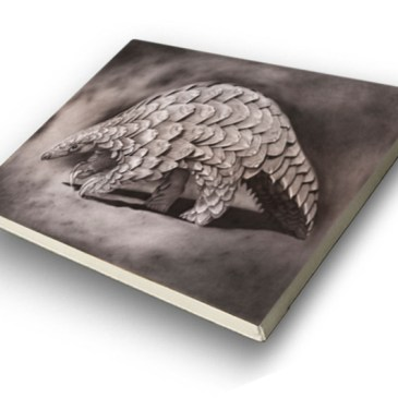 The Studio Art Gallery - Archival Canvas Print Stretched - Pangolin - Craig Ivor