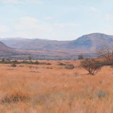 Andrew Cooper   The Studio Art Gallery - A Dry October, Pilansberg, Acrylic on Canvas, 100cm by 60cm
