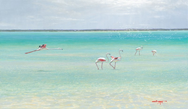 Studio Art Gallery | Andrew Cooper | Flamingoes and Turns, Churchhaven