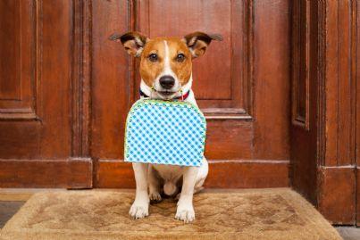 cane con valigia fuori dalla porta